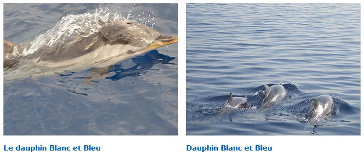 Frôler de vrais dauphins sauvages dans leur milieu naturel, en France ? Oui !